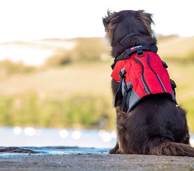 Red Paddle Co dog buoyancy aid