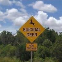 suicidal_deer_thumb