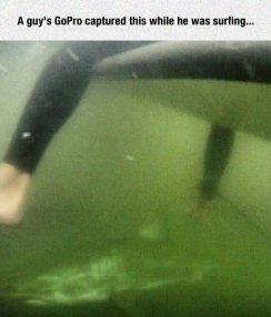 cool-surfing-shark-GoPro-ocean