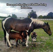 cool-horse-goat-hidden-farm