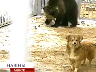 В центре экотуризма Станьково живет необычная пара: медвежонок и собачка