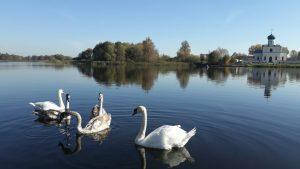 Озеро, лебеди, храм в Станьково. Осень октябрь 2018