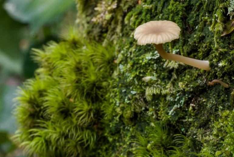 mushroom on a mossy tree in Stanley Park