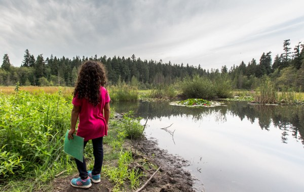 A person stands at the edge of Beaver Lake.