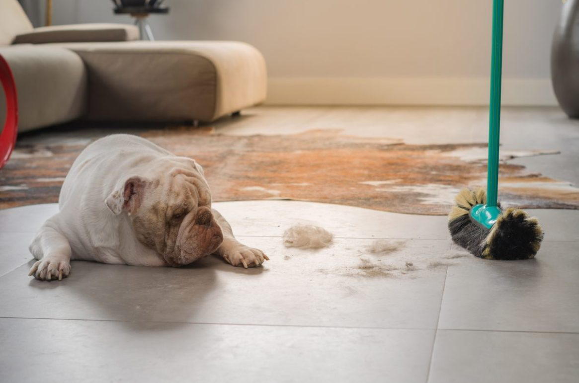 Cleaning-Pet-Hair-e1527504694463