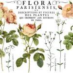 Flora Parisiensis (Pad 12×16)