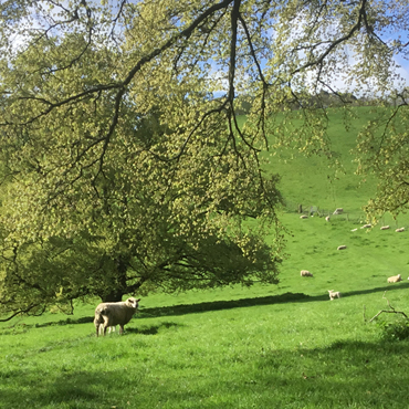 South Downs Lamb