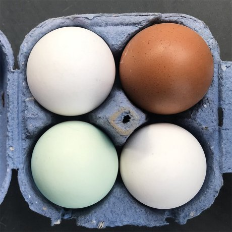 rookery_eggs