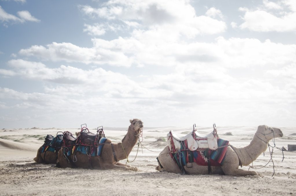 A Camel Through the Eye of a Needle, and Other Wild Tales of Translation