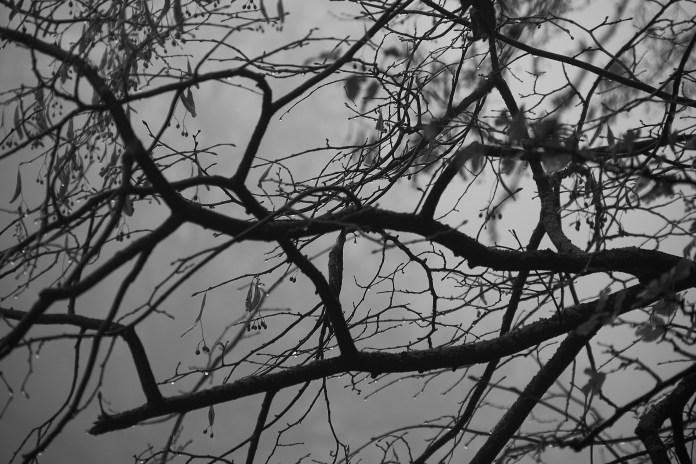 Primrose brances fog drips.jpg