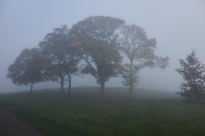 Primrose dome fog.jpg