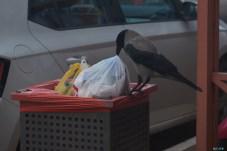 Day 5 Crow fine