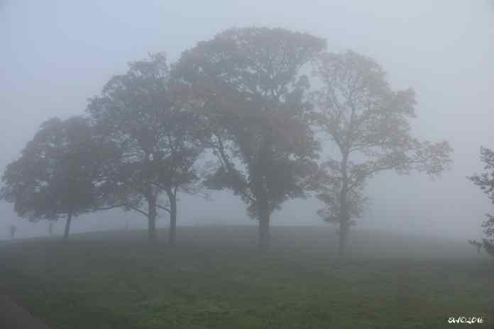 Three trees fog 6