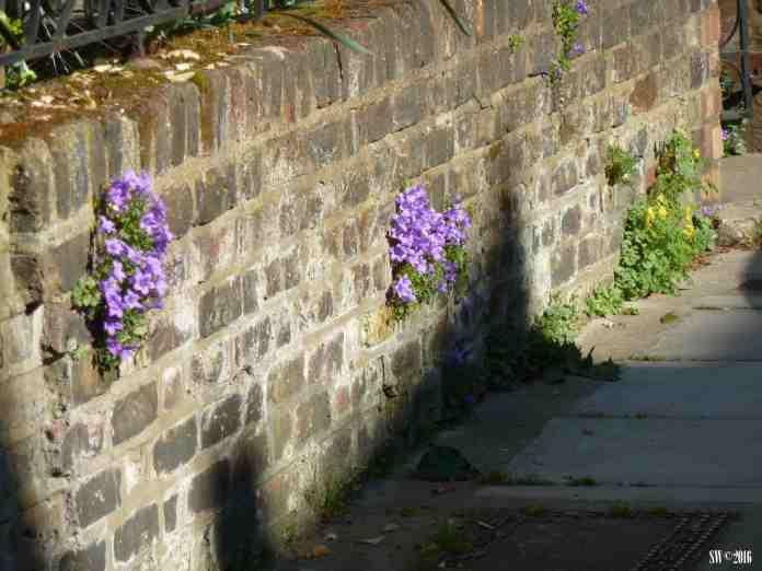 """Wall"" Flowers.jpg"