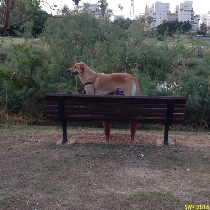 2-legged dog