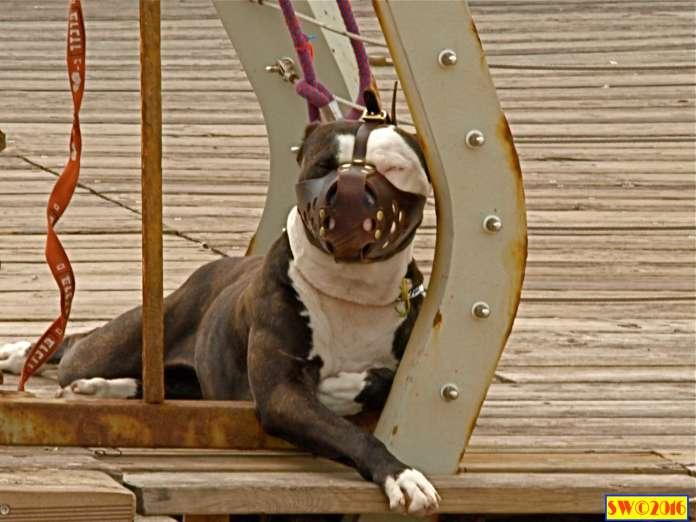 Dogs Tel AvivPark & Port Tel Aviv