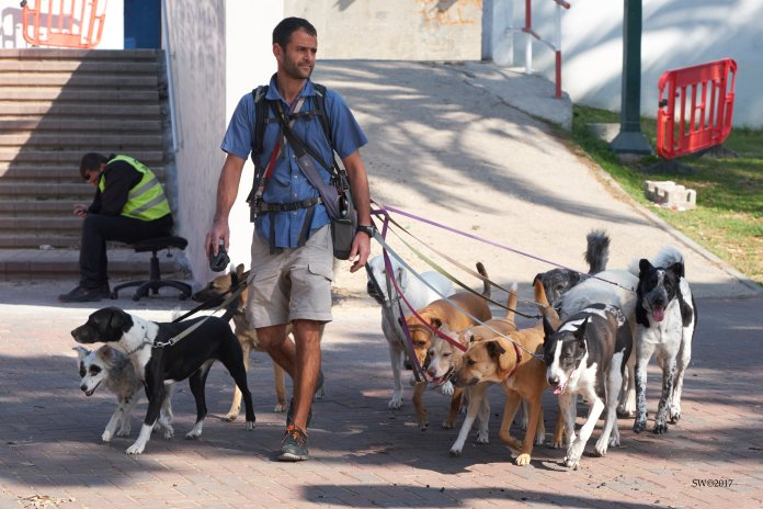 10-dogs-handler