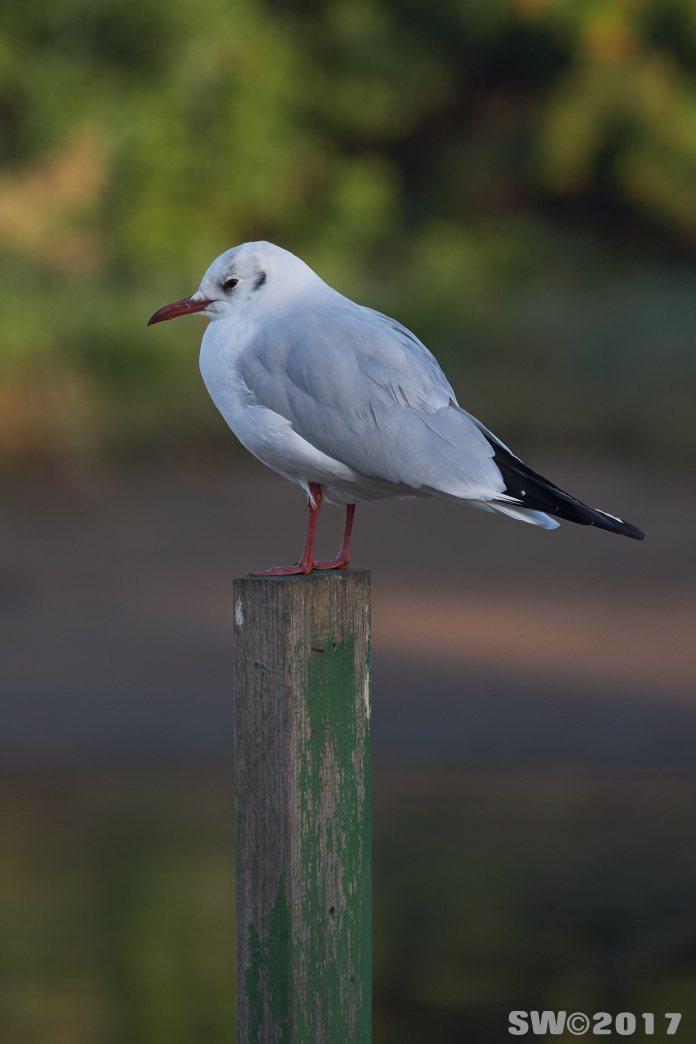 gull-park-hayarqon