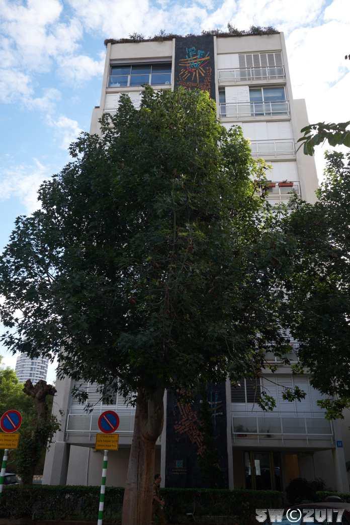 Hidden by tree