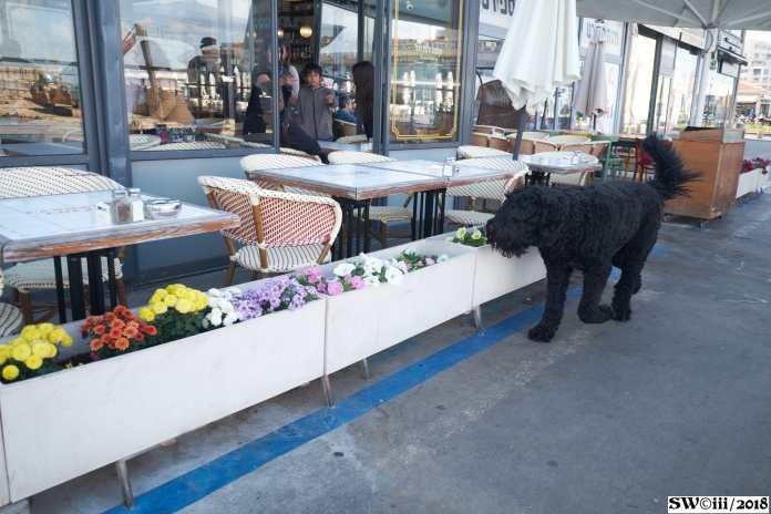 Friday black dog