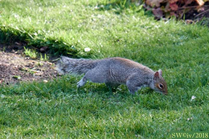 Scurrying squirrels