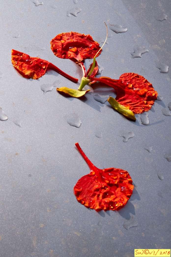 Petals on car