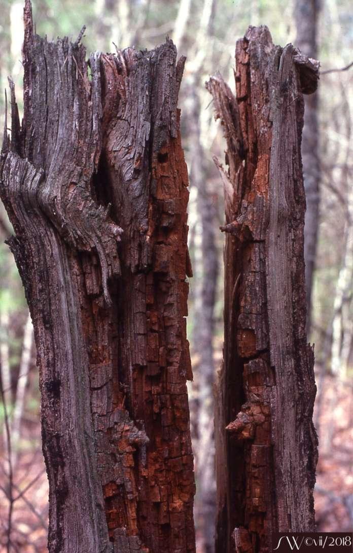 Talking trees (pre-2001)