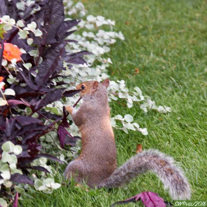DSCF2901Squirrel feeding