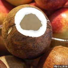 Coconuts DSCF3940