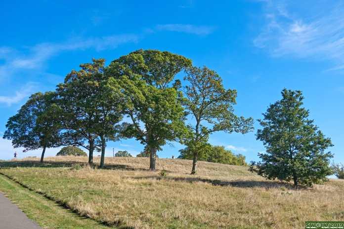 Still summer (just) Primrose Hill