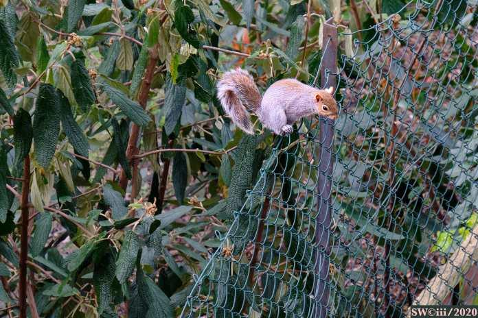 Squirrel — Jump