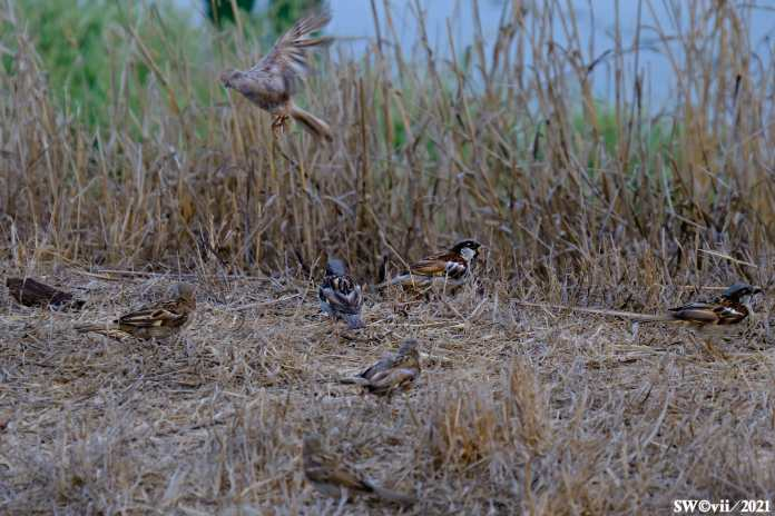 Little birds 1