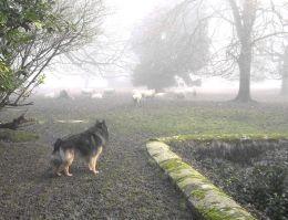 Phex im Nebel