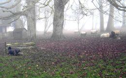 Rudi im Nebel