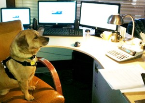 Joe, the Sand Solutions tax dog, hard at work on a Saturday afternoon. (Ted Perkins)