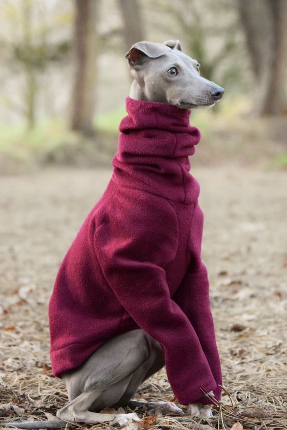 Скачать картинки про собак бесплатно: Attention Required ...