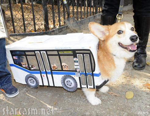 DogBus