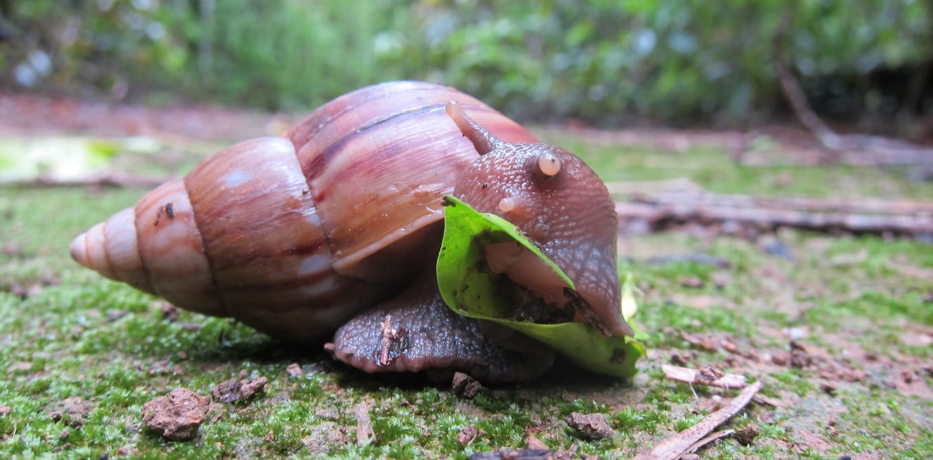land snails reering small business grant