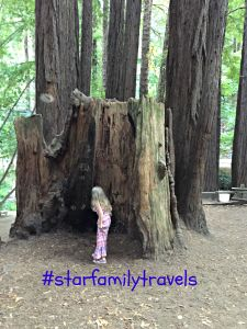 California, travel, Redwoods