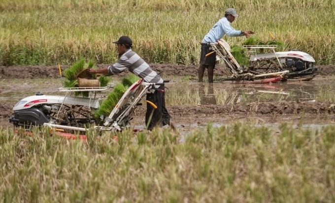 perbedaan pertanian modern dan tradisional