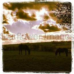 Kent countryside, UK (pdf)