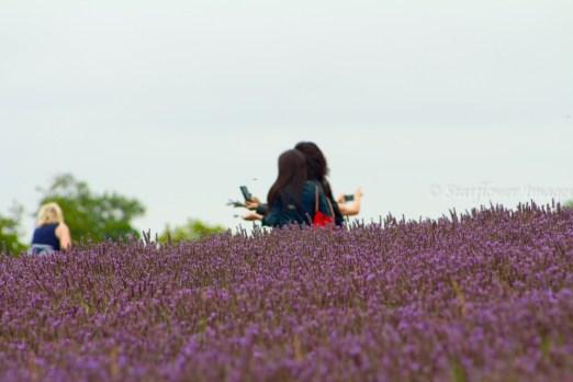 Lavender fieldIMG_2614_1024