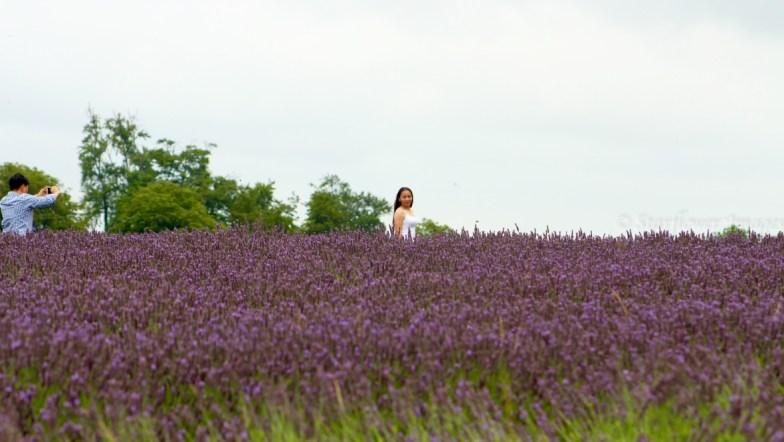 Lavender fieldIMG_2617_1024