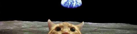 header_mooncat