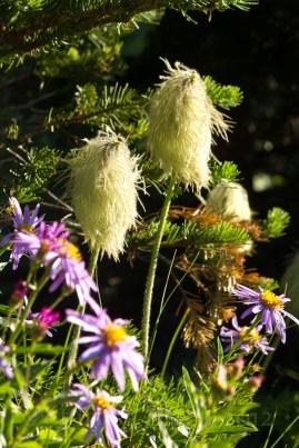 MtRainer_Wildflowers-web-6841