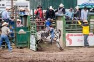 Ketchum Kalf Rodeo 7921