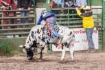 Ketchum Kalf Rodeo 7926