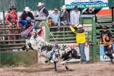 Ketchum Kalf Rodeo 7928