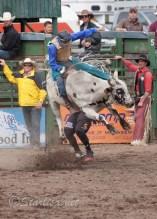 Ketchum Kalf Rodeo 7912-2