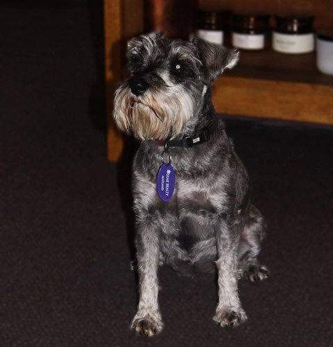 Esther - The Star Office Mascot